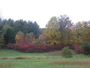 Autumn-Jackson-County